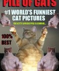 Piles of Cats (#1 World's Funniest Cat Pictures)