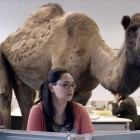 GEICO Hump Day Camel Commercial – Happier than a Camel on Wednesday