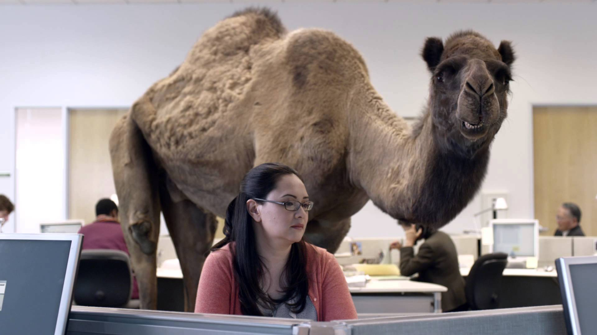 Hump Day Toys : Geico hump day camel commercial happier than a on