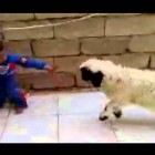 funny one liner jokes funny news stories funny news Most funny video from Tibet.by TamdingArts funny