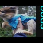 ★ (NEW!) Funny Dogs Video Compilation – America's Funniest Home Videos – Part 807 | OrangeCabinet