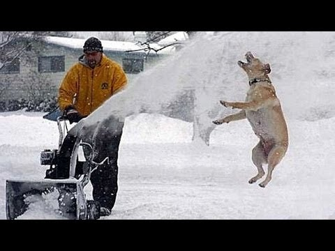 Snowing Cats And Dogs