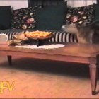Silly Cats And Dogs – AFV Music Compilation   AFV