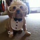 Top Dog Vines – Part Five best compilation of the funniest and cutest dog and puppy vines!
