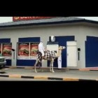 FUNNY VIDEO  Don't get the hump! Man drives CAMEL through Burger King