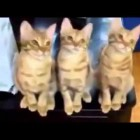 Most funniest Animal video – Funniest cat video