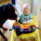 Cute baby vs Rottweiler dog funny video …… Most funny baby vs dog video …….