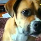 ★ FUNNY CATS & DOGS AFV   America's Funniest Home Videos part 645   YouTube