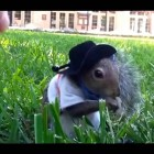 World Most Funny Animal Videos Compilation 2014