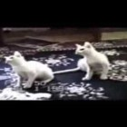 World's Most Funny Cats: All Time Favourite [HQ] – MUST WATCH !!!!!