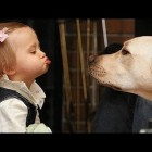 Funny dogs and babies talking – Cute dog & baby compilation