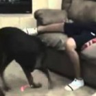 The World's Most Funny Dog Videos 2013