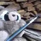 Bears wildlife Show hilarious outdoor stuffed animal show mayhem funny Jesse Gabel