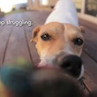 Digital Signage: Stop Struggling Funny Dog Video