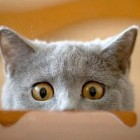 Funny Cats | Funny Cat Videos | Cool Cute Cats Funny Videos #7
