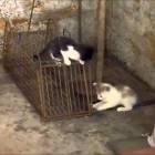 Funny cats videos Rat trap is cute kittens playground ! youtube original