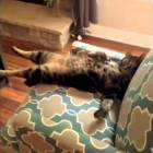 FUNNY VIDEOS | Funny Cats | Funny Animals | Funny Moments  | Funny Cat Vines