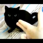 Most Funny Cats And Dogs Playing Dead After Finger Shot Compilation 2014