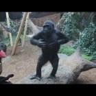 Смешные животные || Funny Animals #4
