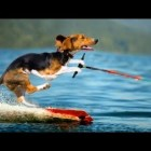 Funny animals playing sports – Cute animal compilation