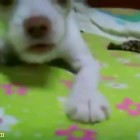 The World s Most Funny Dog Videos November 2014