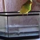 Видео о животных: попугай-приколист. funny animals