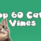 Feline Vines: Funny Cat Vines