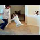 Awesome Talented Funny Dog – The most talented dog ever Funny Video