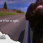 Digital Signage: Take It for a Spin funny dog video
