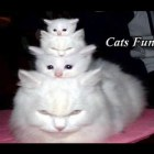 Funny Cats Compilation 2015 Most See Funny Cat Videos – Try Not to Laugh