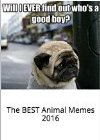 Memes: Funniest of All Time Book: The BEST Animal Memes 2016
